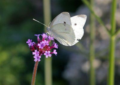 Gärten für die Sinne (2)