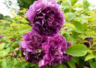 Gärten-für-die-Sinne-(3)