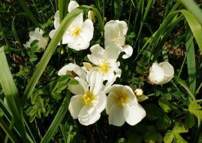 Gärten-für-die-sinne-(4)