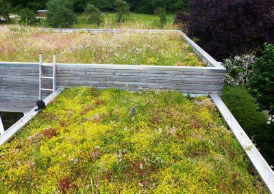 Grüne-Dächer-(1)