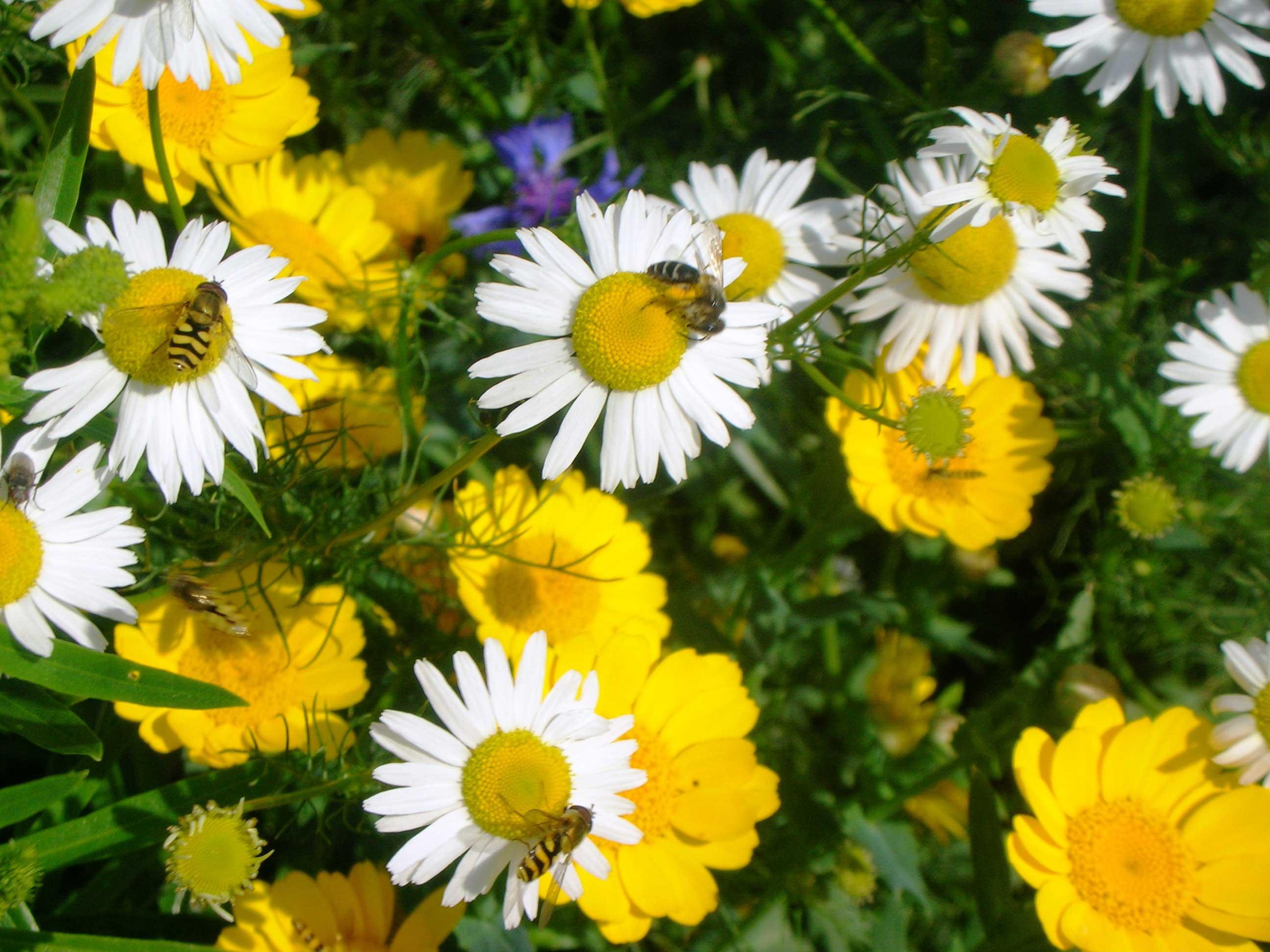 Pflanzen klemp gartengestaltung for Gartengestaltung pflanzen