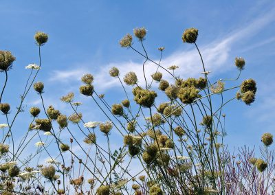 Pflanzungen-und-Ansaaten
