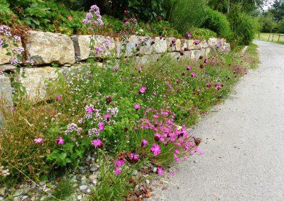 Blumenschotterrasen-(2)