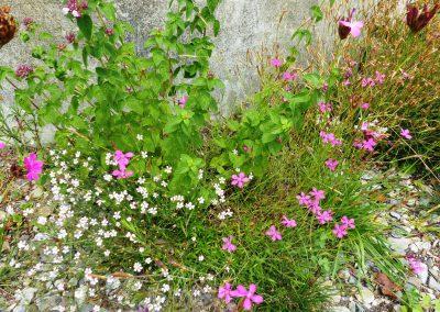 Blumenschotterrasen-(3)