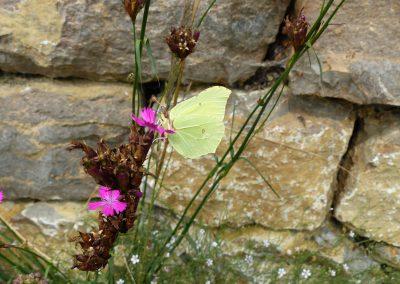 Blumenschotterrasen-(4)