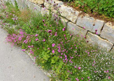 Blumenschotterrasen-(6)