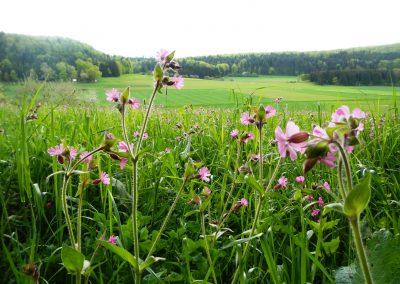 Blumenwiese-Vilsingen-Projekt-(1)