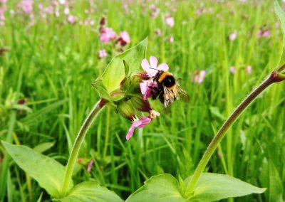 Blumenwiese-Vilsingen-Projekt-(2)