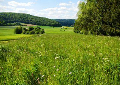 Blumenwiese-Vilsingen-Projekt-(3)