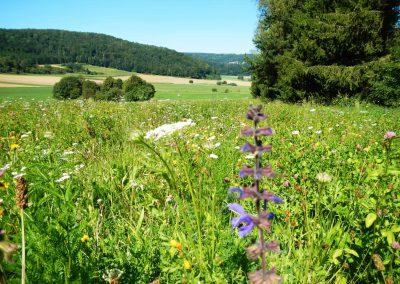 Blumenwiese-Vilsingen-Projekt-(5)