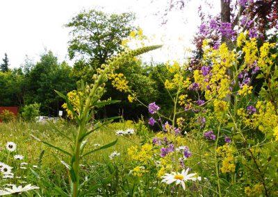 Naturnaher-GartenII